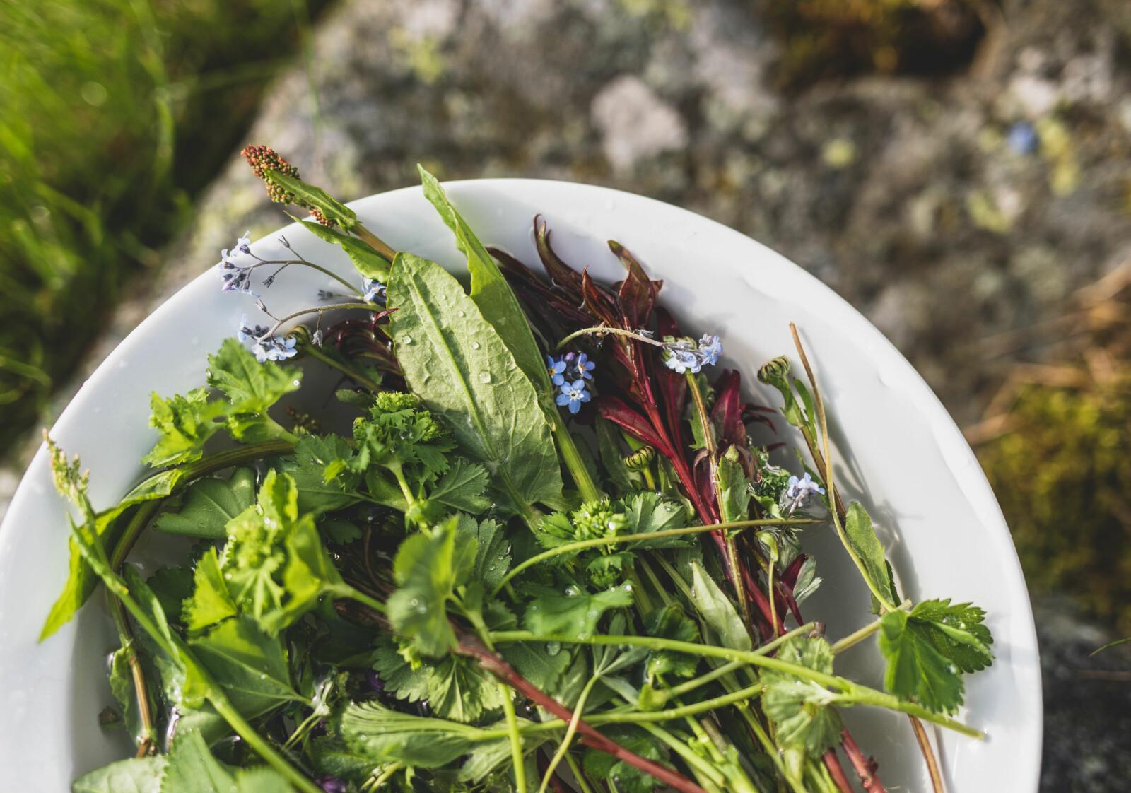 Fargerikt fellesskap: Marikåpe, forglemmegei og syreblader er bare noe av det Kristin Helene Randulff Nielsen har i sin friske salat.