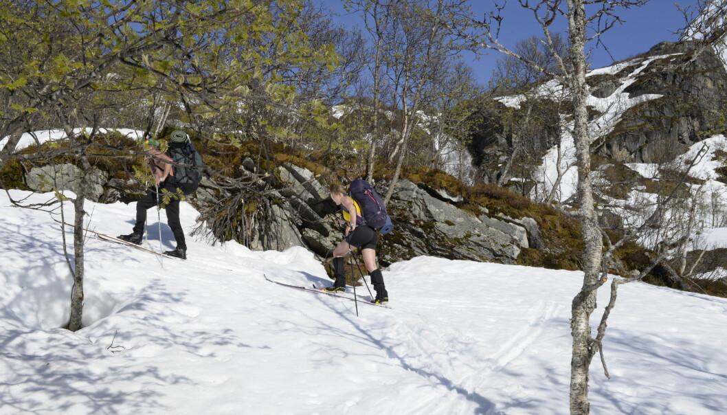 Med føttene i vinteren og ansiktet i sommeren bakser vi oss opp bakkene fra Bødalen mot brekanten på Jostedalsbreen.