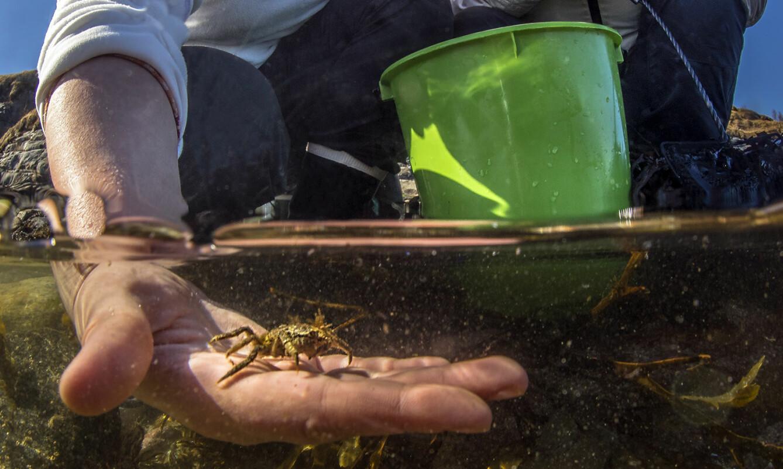 """<span class="""" italic"""" data-lab-italic_desktop=""""italic"""">Å være i tidevannsonen gir tid til å være i øyeblikket, og kjenne en krabbe liste seg kilende over håndflaten din.</span>"""