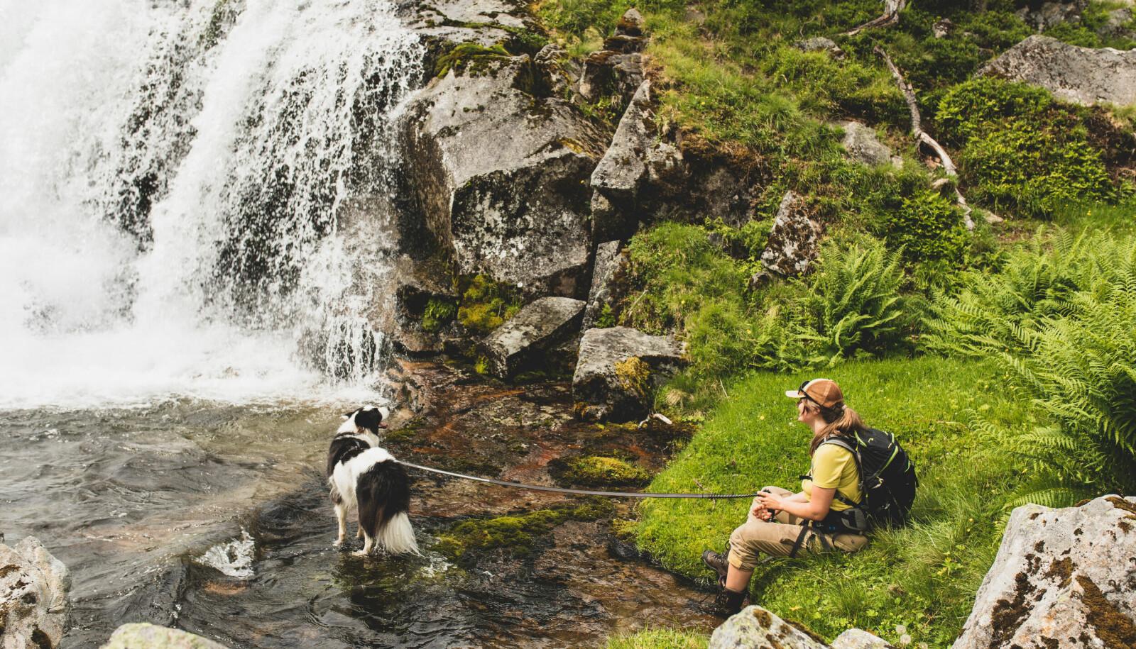 """<span class="""" italic"""" data-lab-italic_desktop=""""italic"""">Hunden Louis set pris på eit avkjølande bad. Kulde og kaldt vatn hjelper også på smertene i foten til Helene.</span>"""